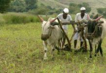 महाराष्ट्र विधानसभा चुनाव का मुख्य मुद्दा भी किसान ही हैं